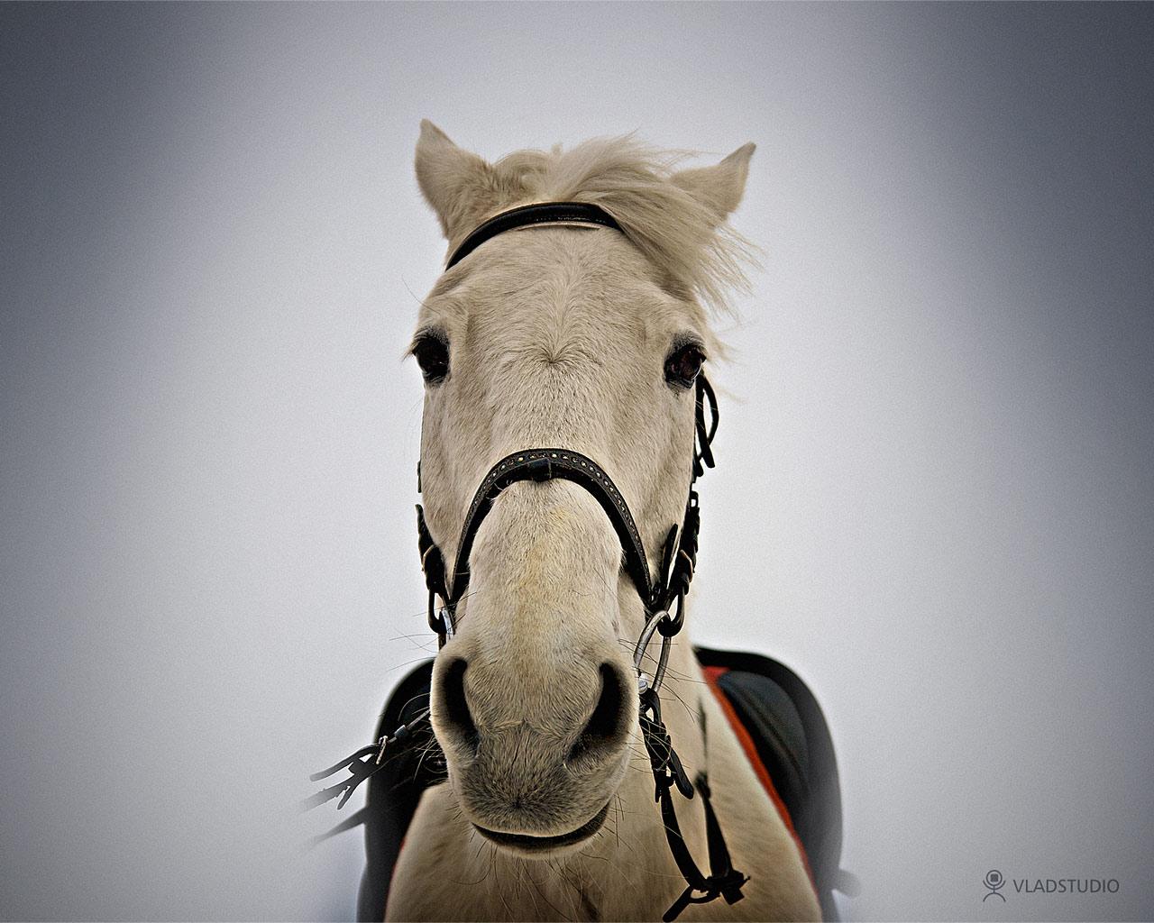 Конь, фото, обои для рабочего стола, фото