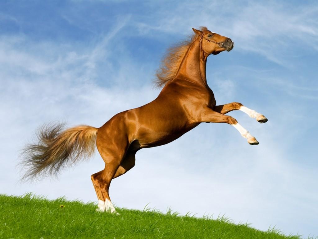 конь скачет на лугу, фото, обои для рабчоего стола