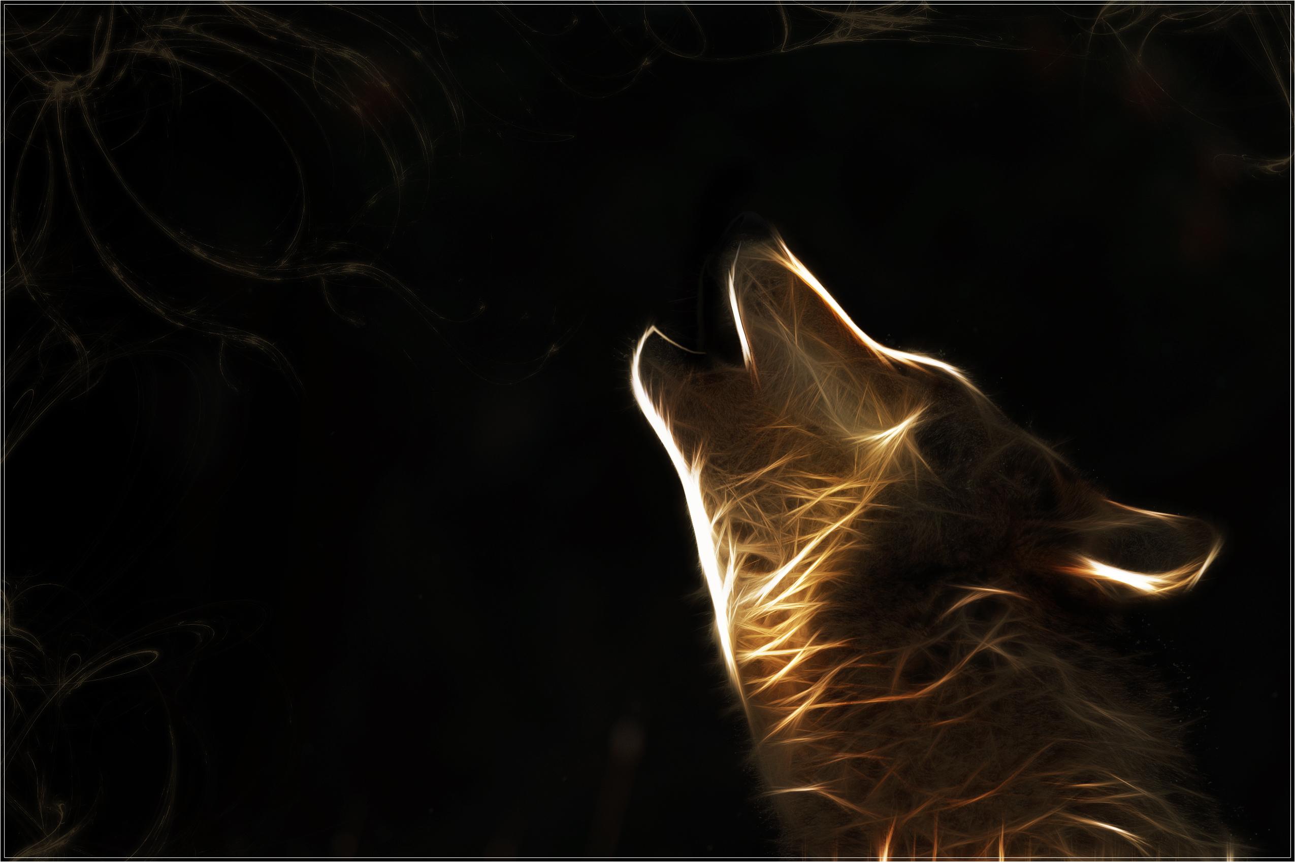 wolf, обои, фото, для рабочего стола