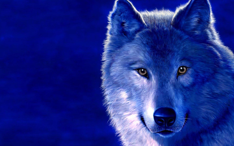 ледяной волк, фото, волки, обои для рабочего стола, wolf