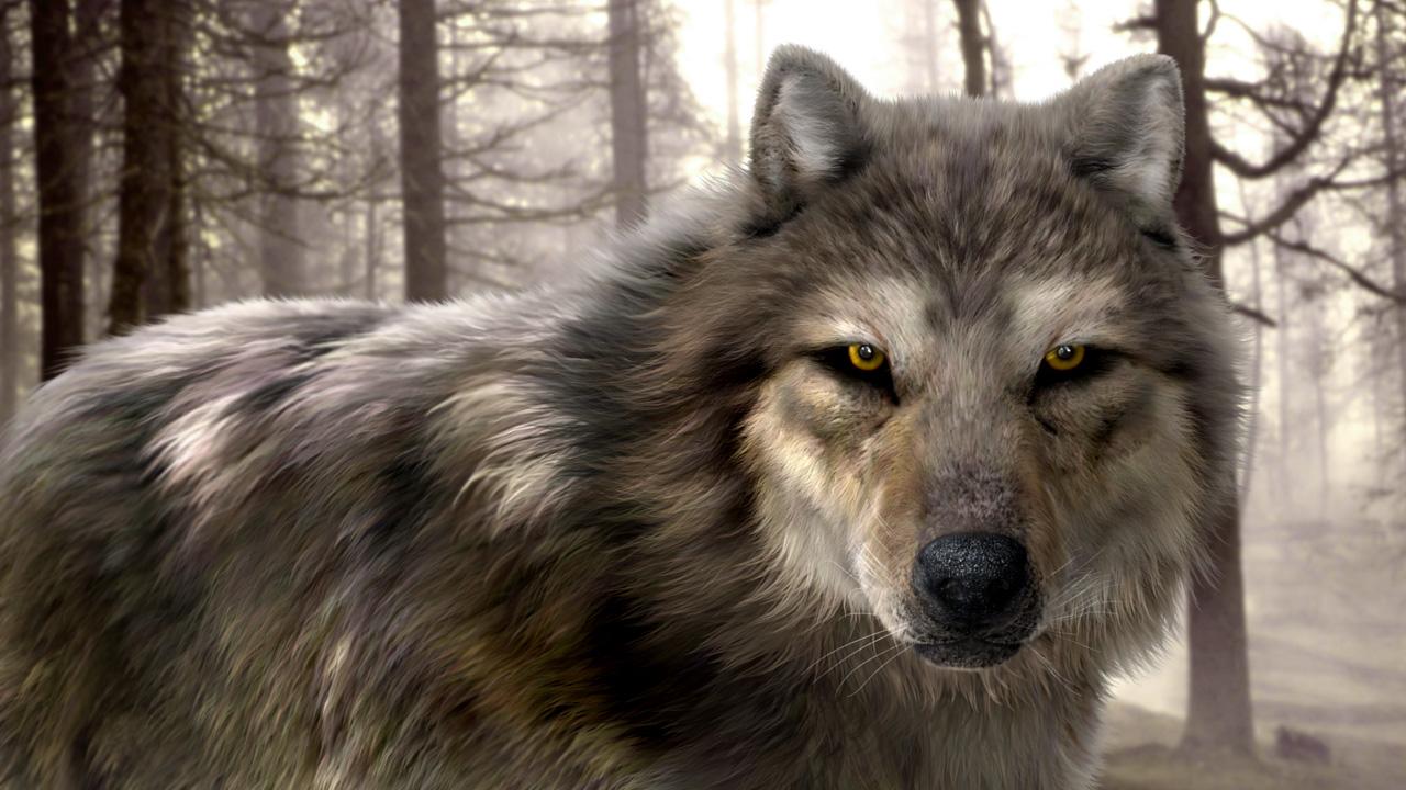 Серый волк, фото, хищник, скачать, обои для рабочего стола
