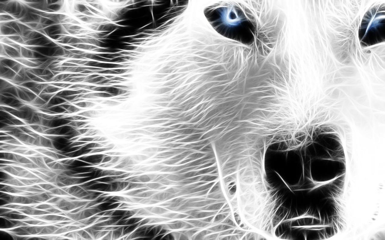 Обои для рабочего стола, фото,  волк, wolf