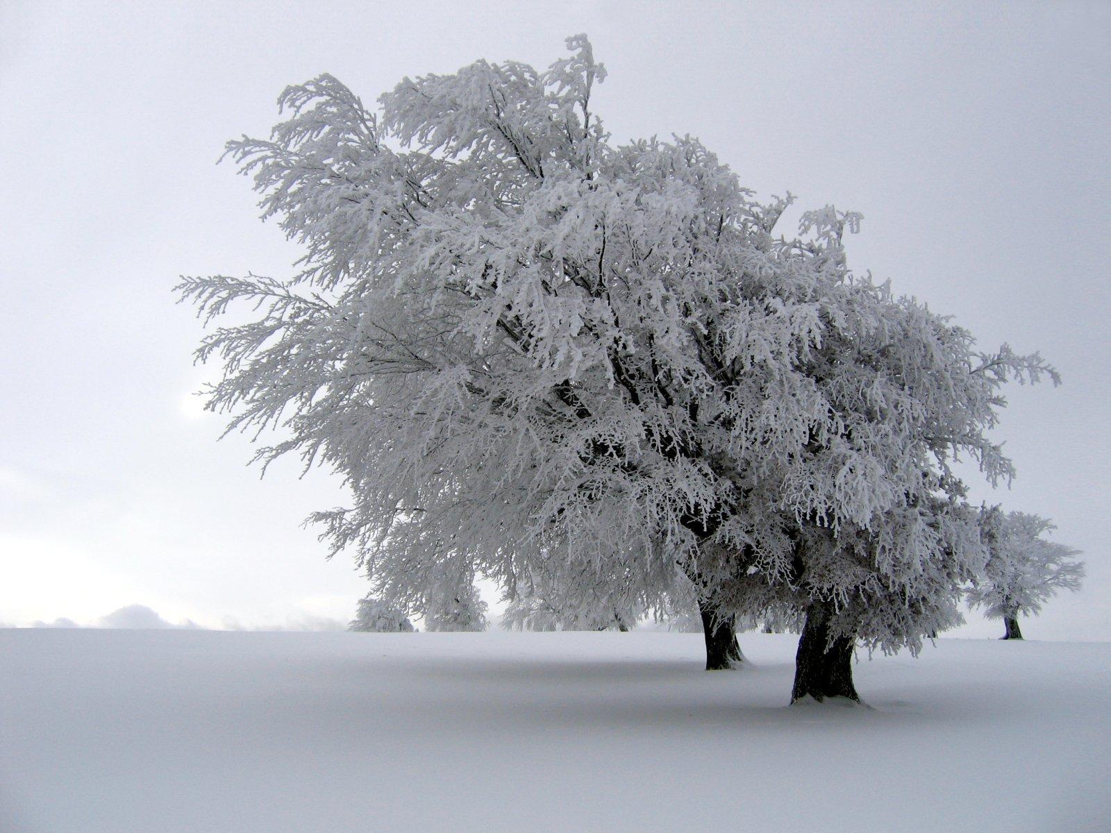 Зима, снег, дерево, мороз, обои для рабочего стола