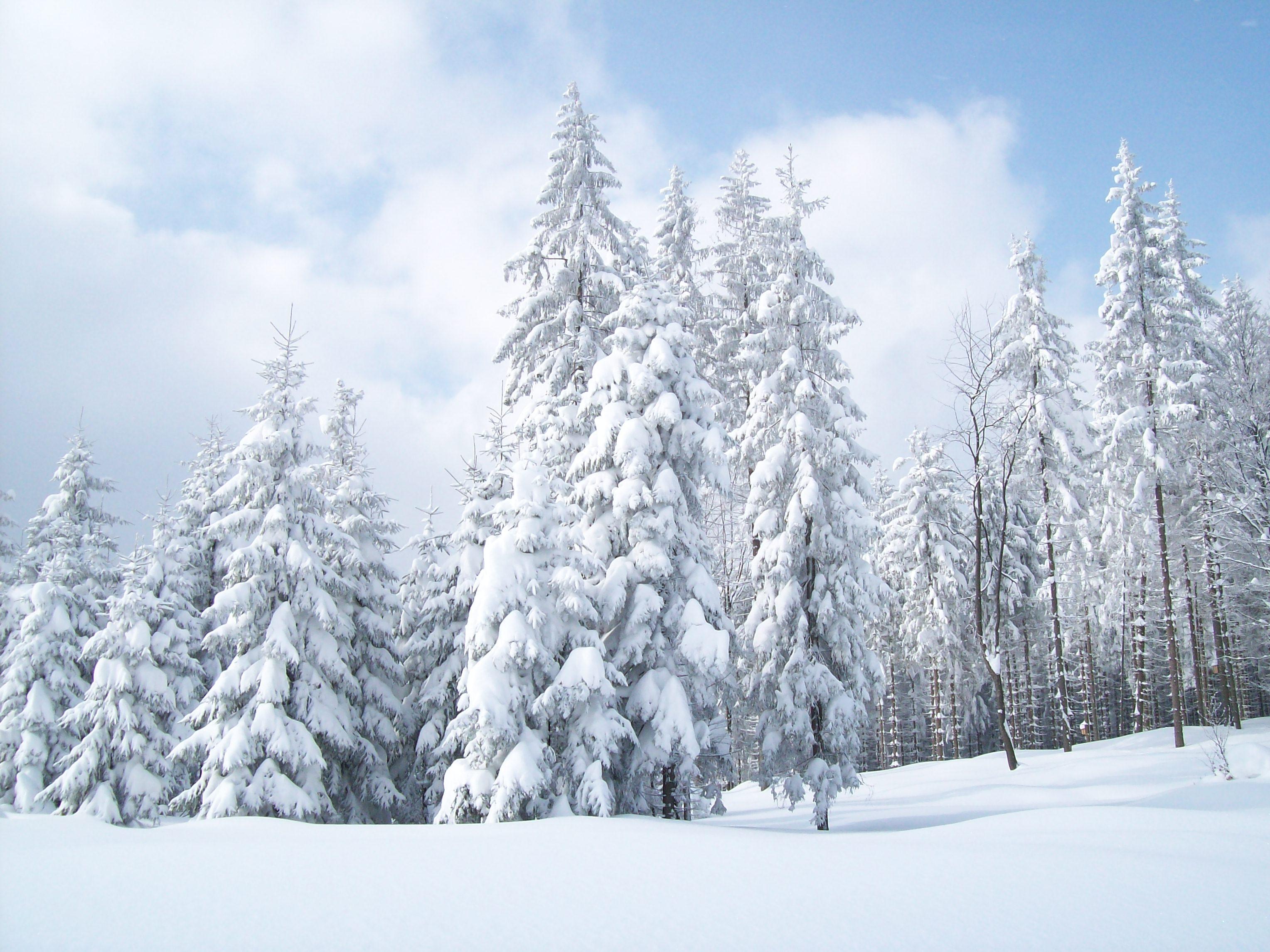 лес, зима, снег, обои для рабочего стола, фото