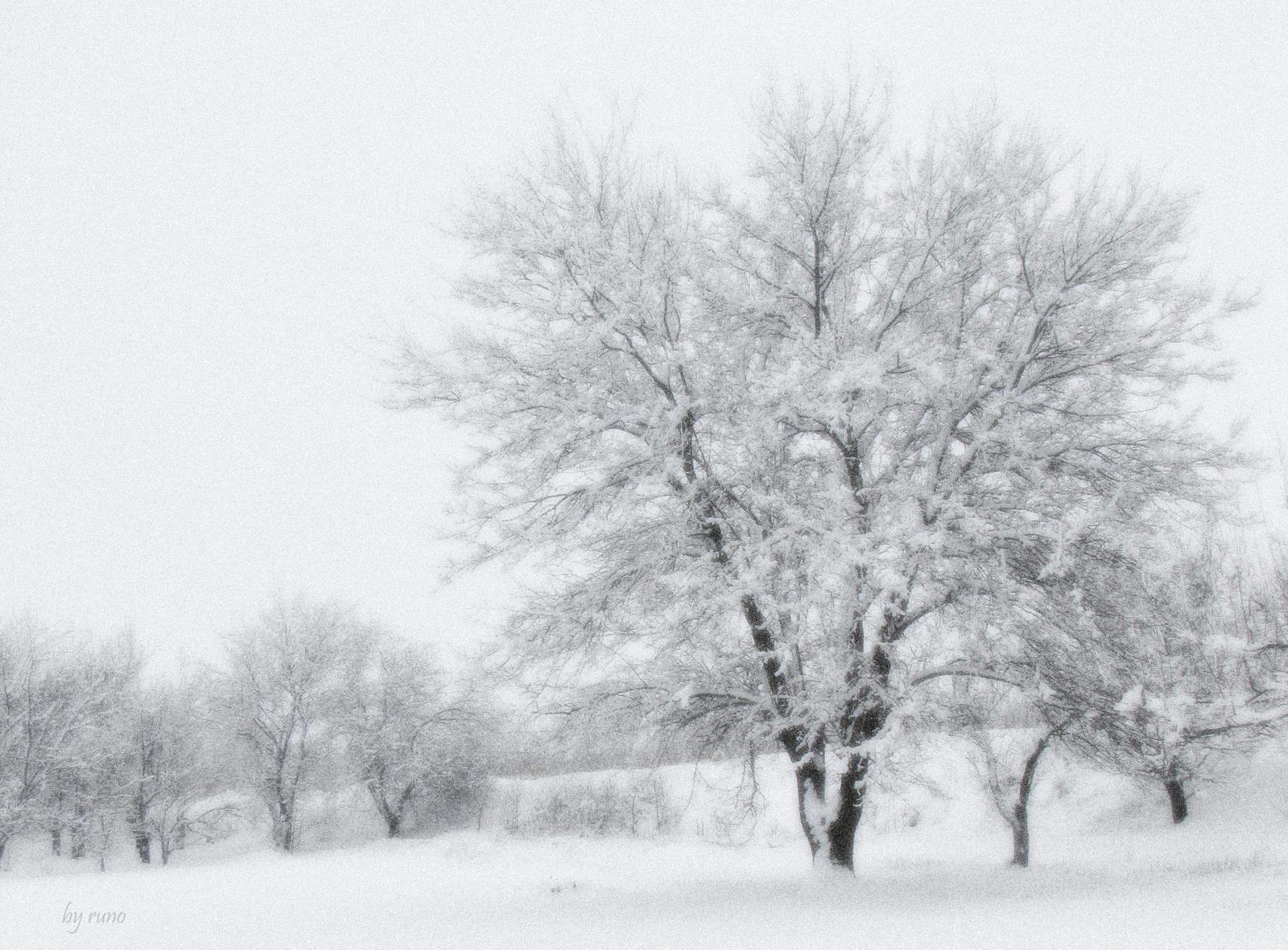 Зима, деревья, фото, обои на рабочий стол, скачать, красиво