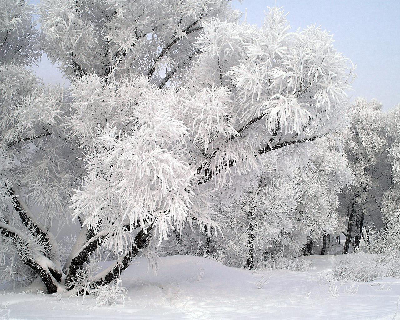 Деревья, снег, зима, обои для рабочего стола