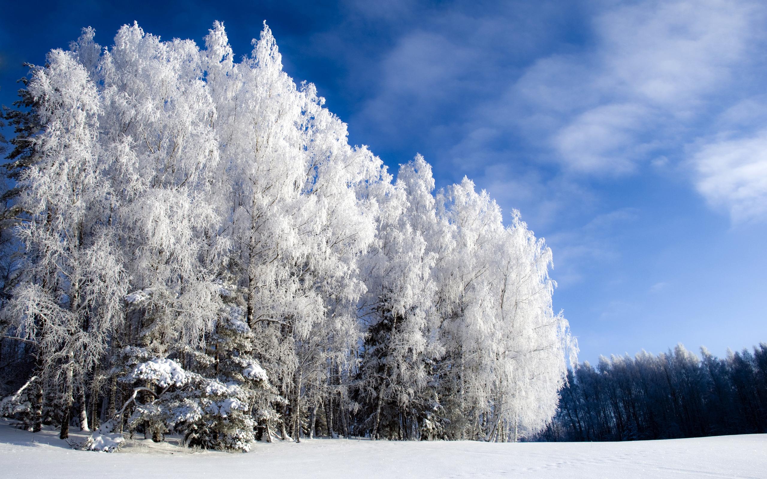 Зима, небо, снег, фото, обои, скачать, красиво