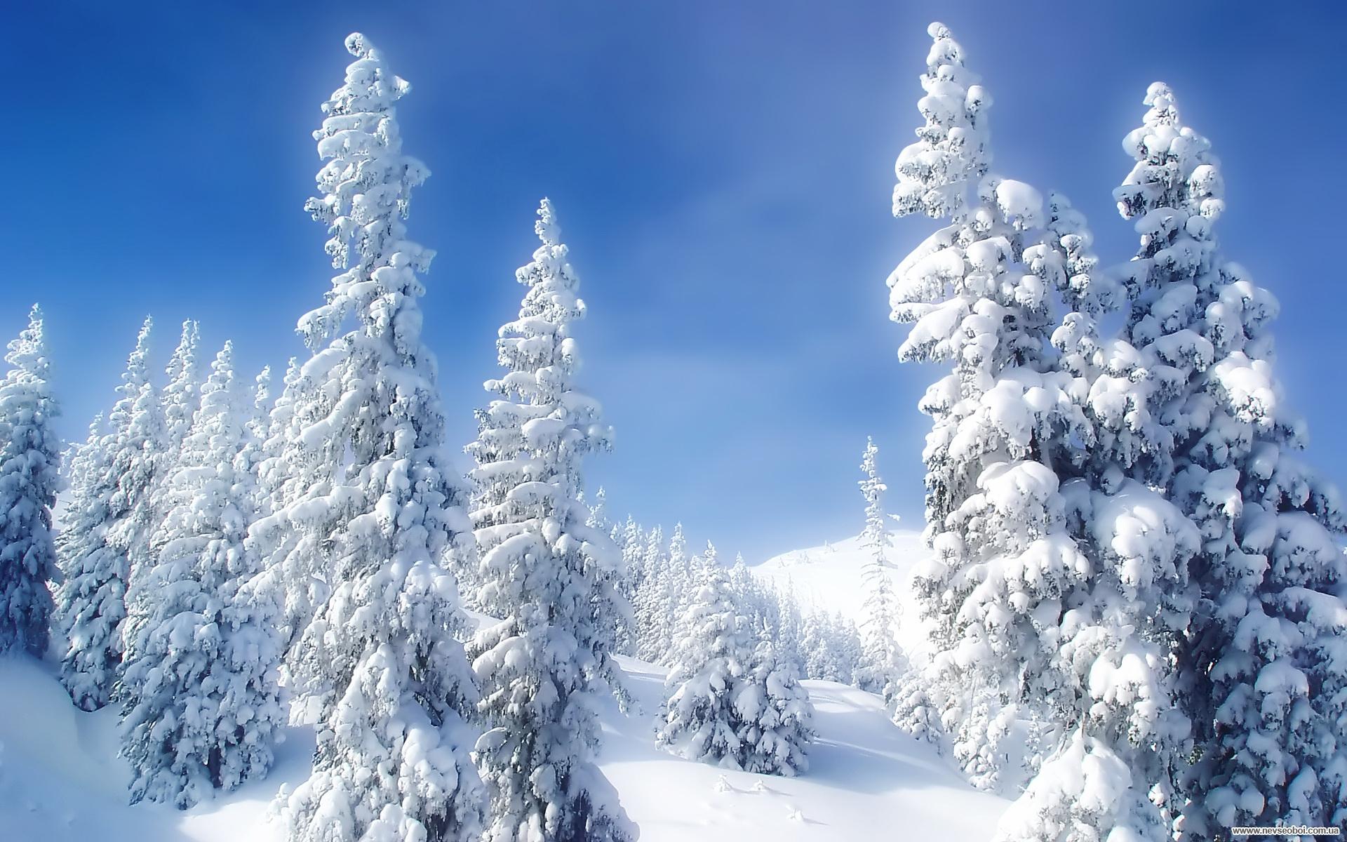 Скачать обои на рабочий стол зима лес