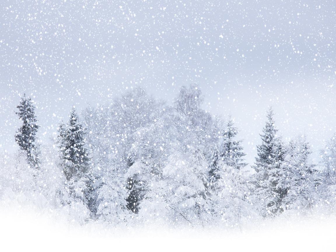 Зимний лес, сугробы, снег, фото, обои, скачать
