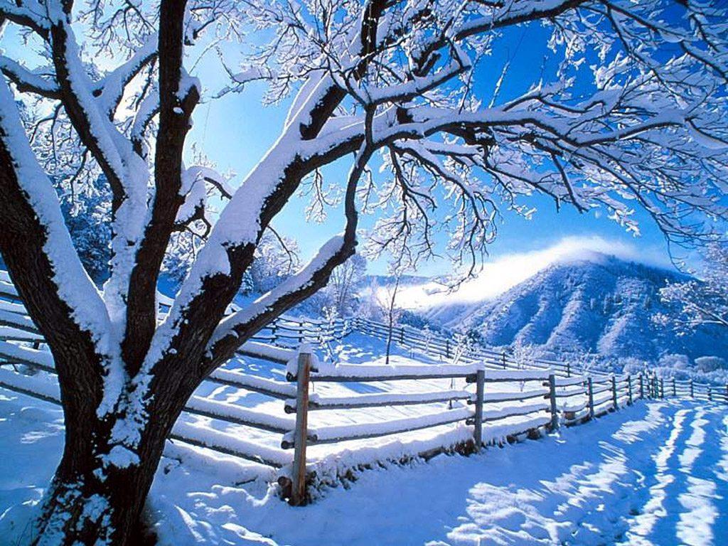 Зима, утро, снег, мороз, обои для рабочего стола, фото