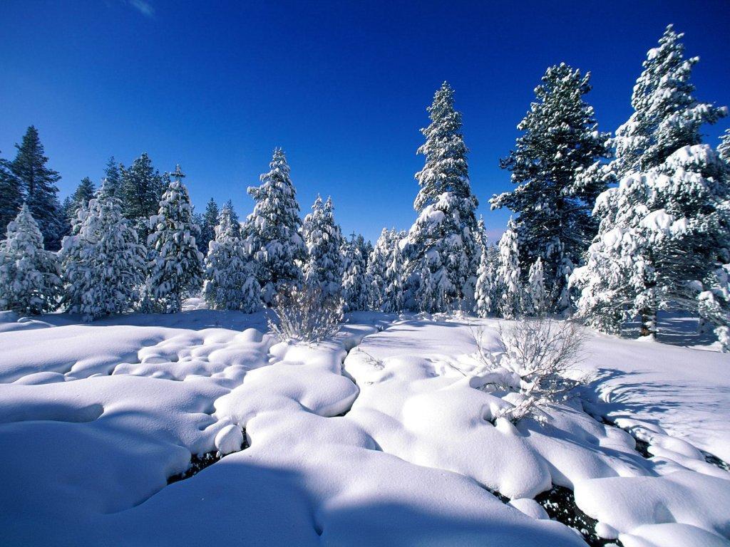 Зима, лес, деревья, снег, фото, обои для рабочего стола