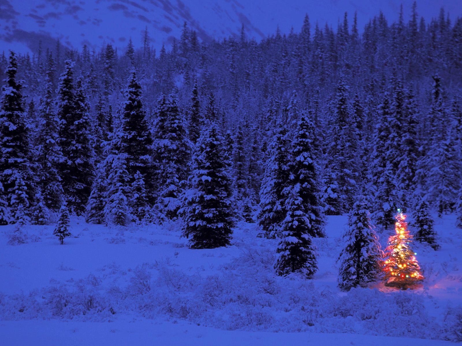 Зима, ночь, лес, скачать, обои на рабочий стол