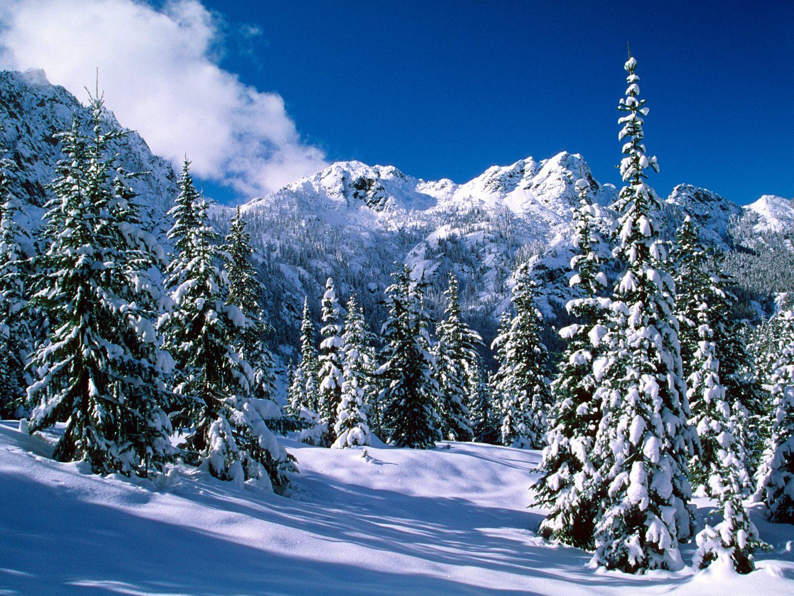 Зима, лес, фото, обои для рабочего стола