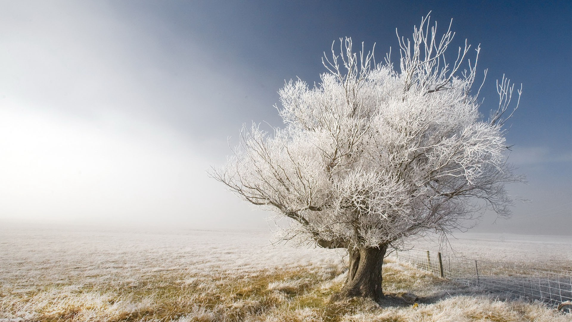 Зима, дерево, снег, фото, обои на рабочий стол