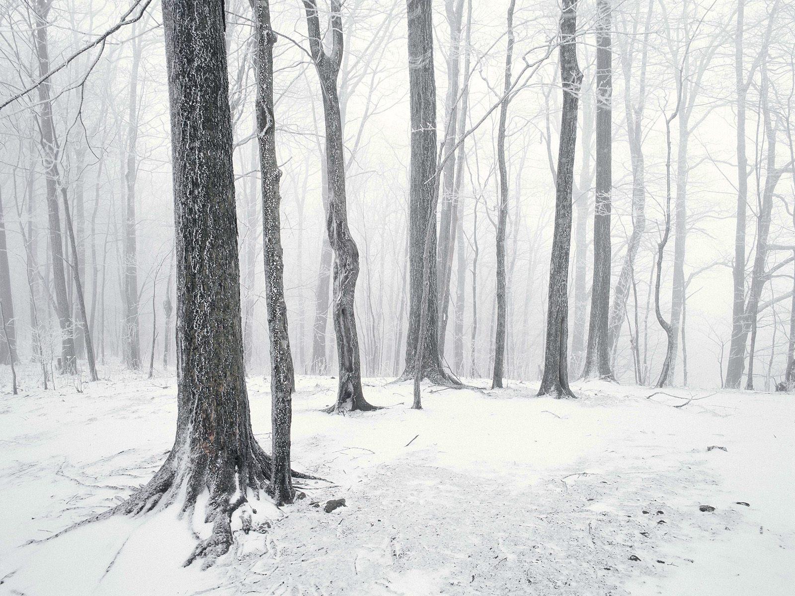 Зимний лес, снег, деревья, обои на рабочий стол
