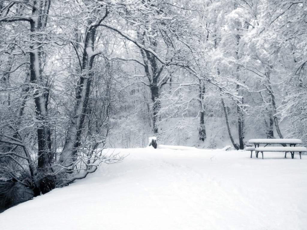 Зимний парк, снег, фото, обои на рабочий стол