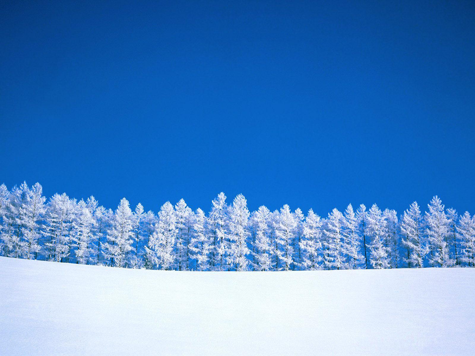 обои для рабочего стола, фото, зима, снег