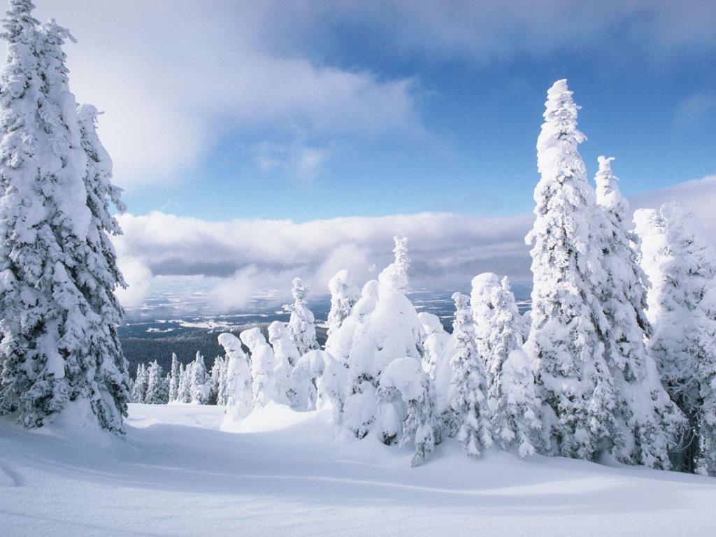 обои для рабочего стола снегири зима