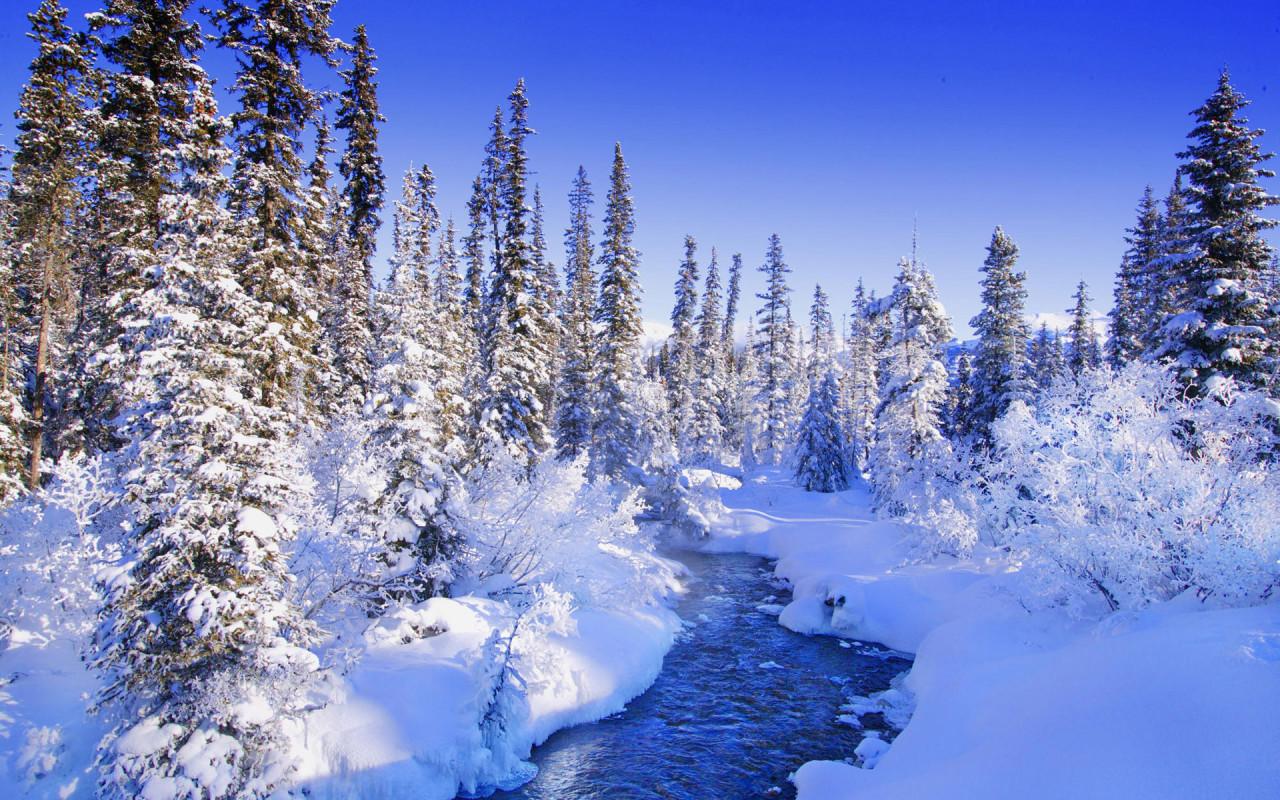Зимний лес, фото, снег, обои на рабочий стол