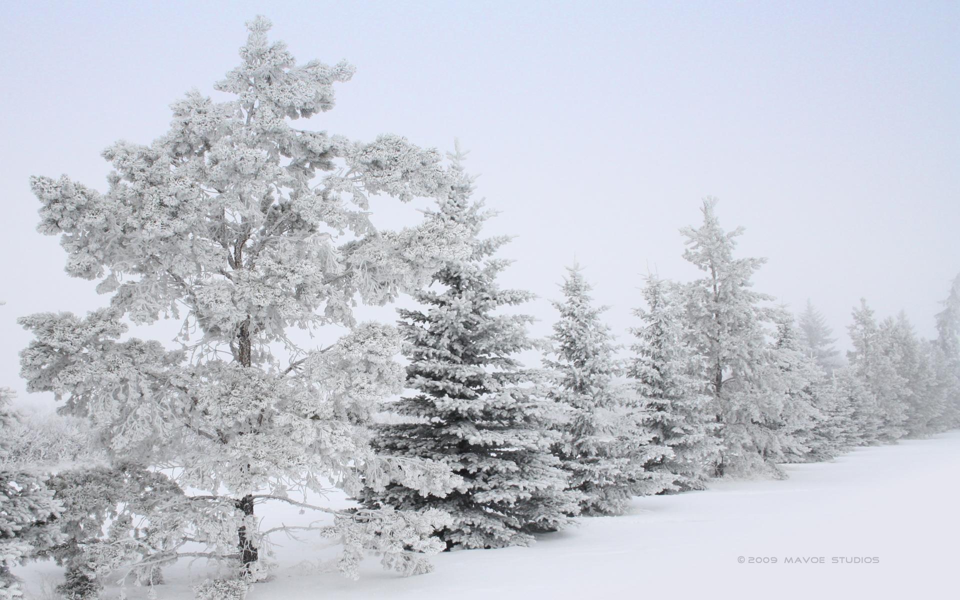Зима, снег, деревья, скачать фото, обои на рабочий стол