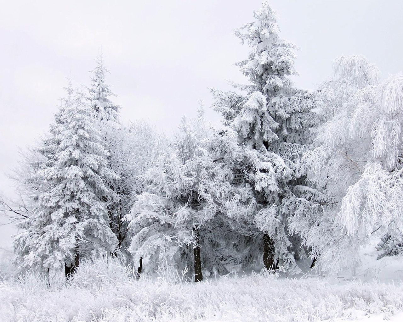 Зимний лес, снег, фото, обои, скачать бесплатно