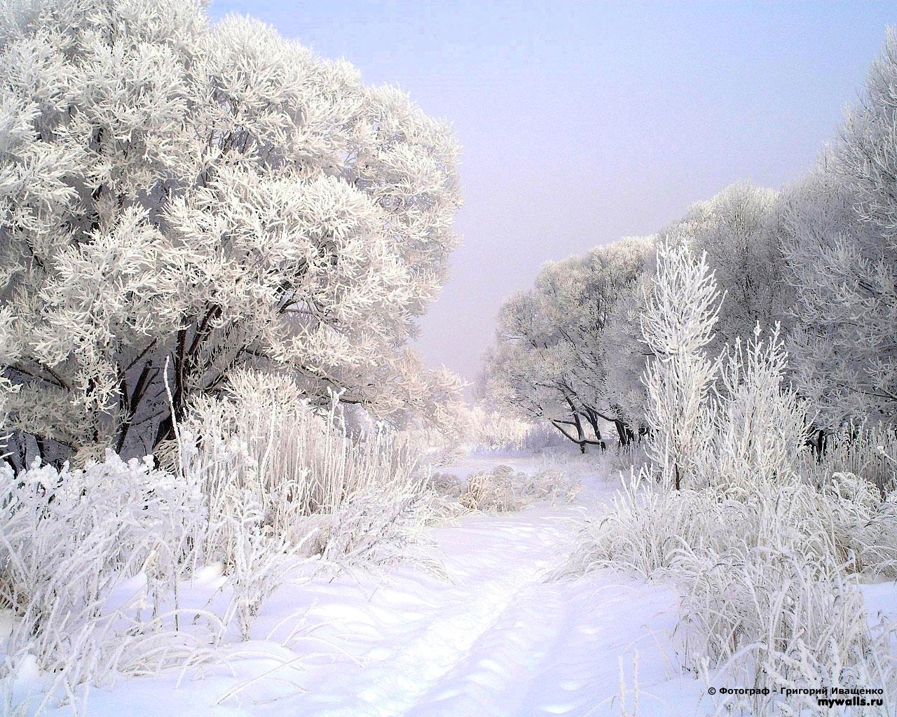 Зима лес дорога обои для рабочего