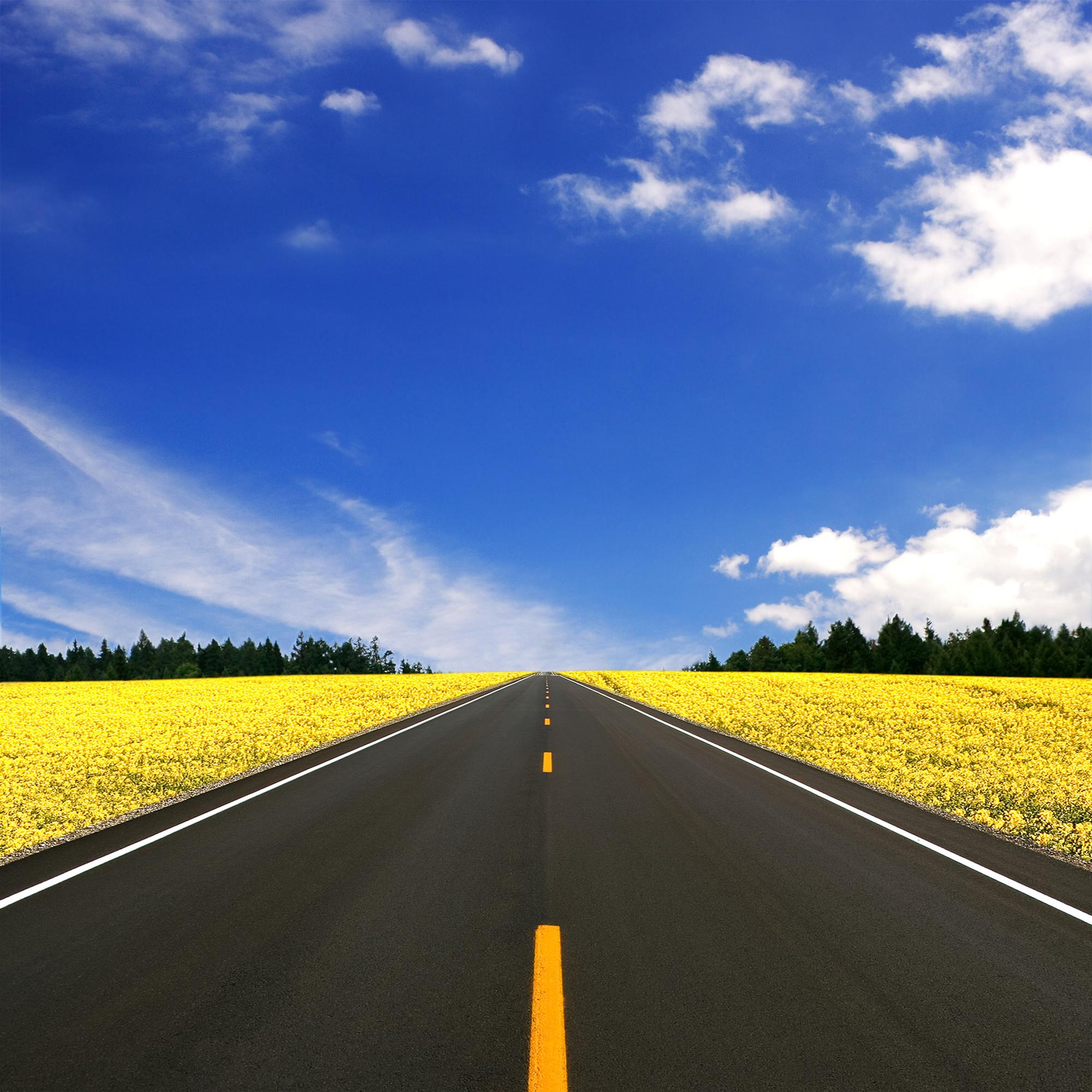 Прямая дорога, поля цветов, фото, обои для рабочего стола