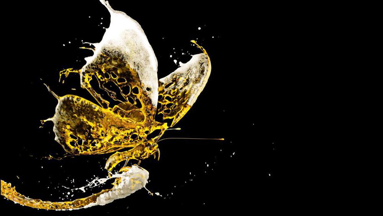 бабочка, брызги пива, фото, скачать