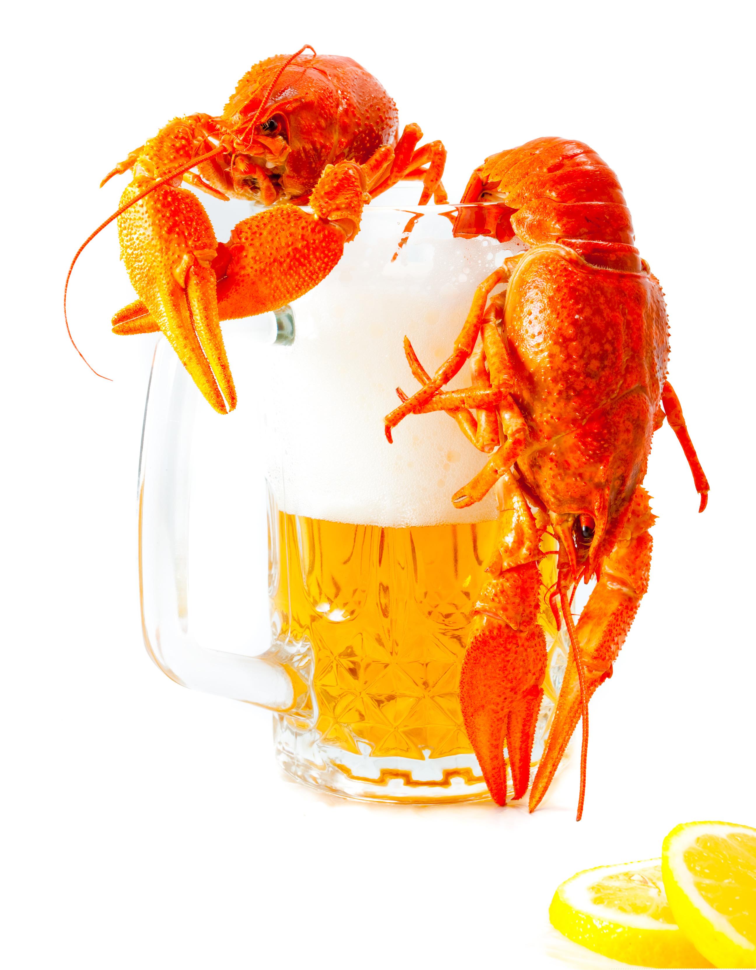 кружка пива с раками, фото, скачать, пиво, обои для рабочего стола