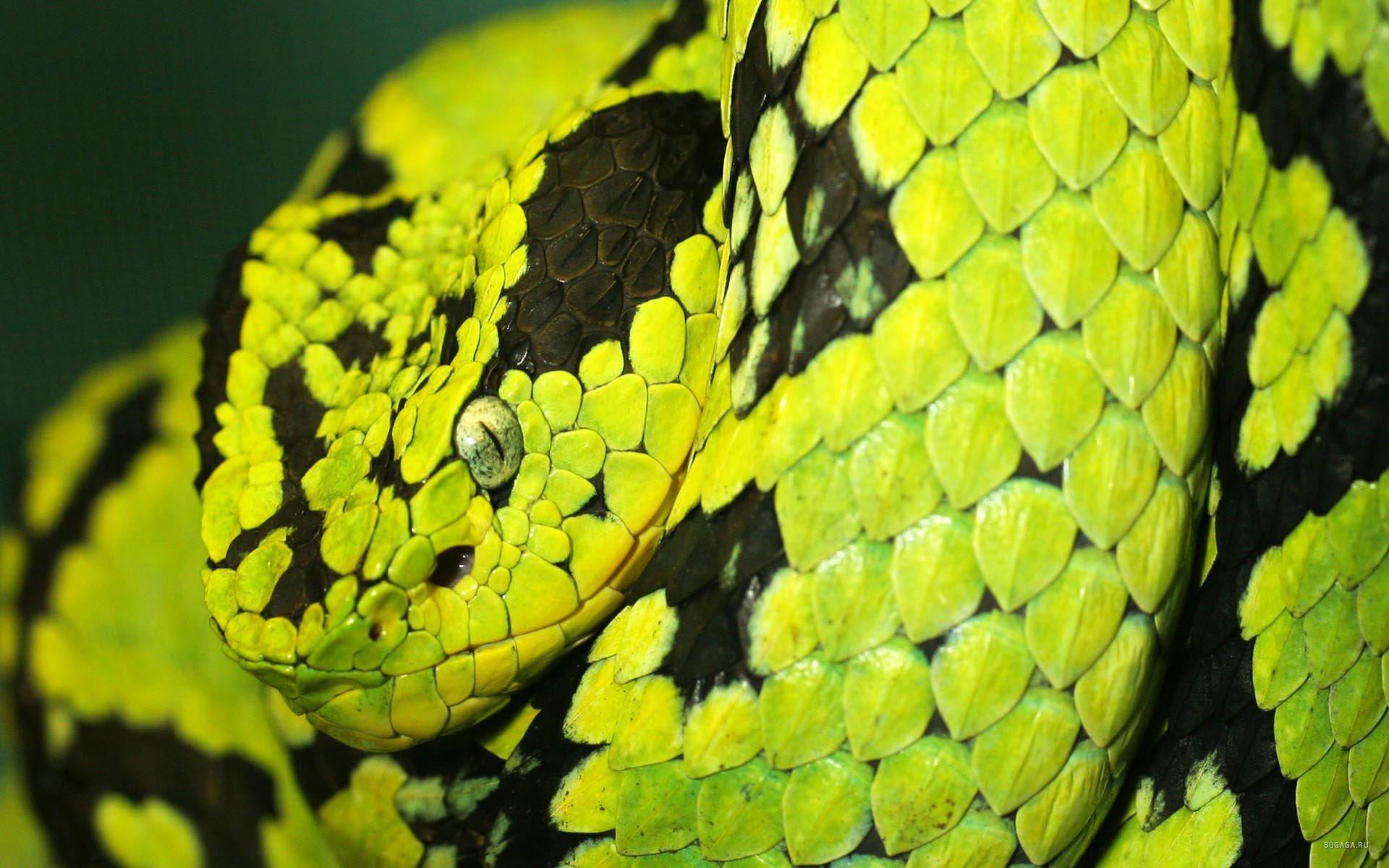 Змея, фото, обои для рабочего стола, скачать