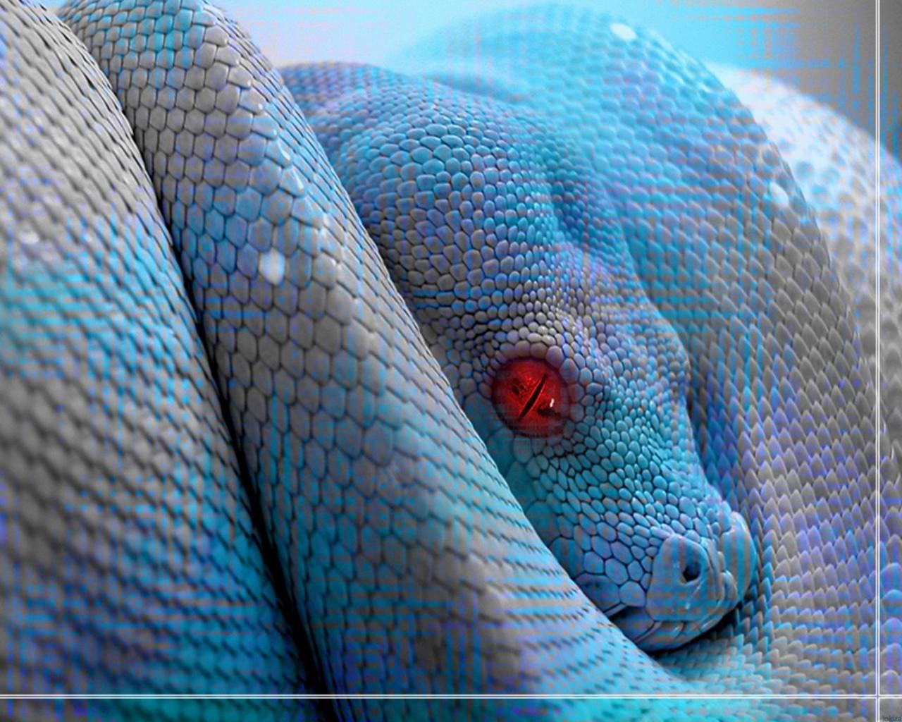 Зеленая змея с красными глазами, фото, обои для рабочего стола