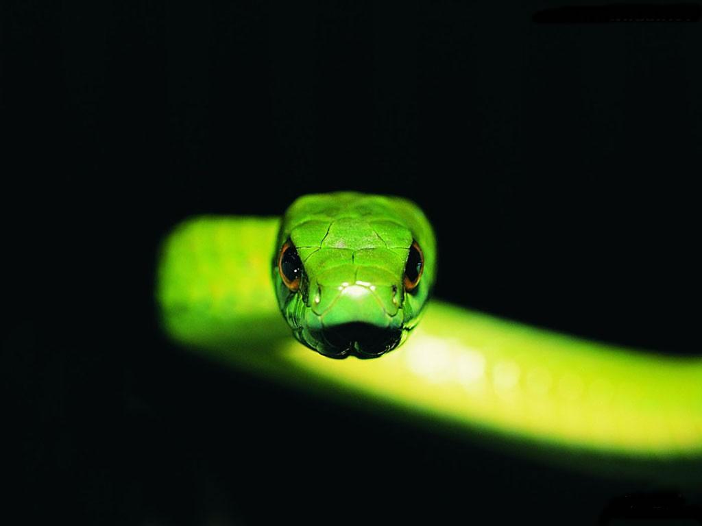 Змея, фото, змейка, обои для рабочего стола