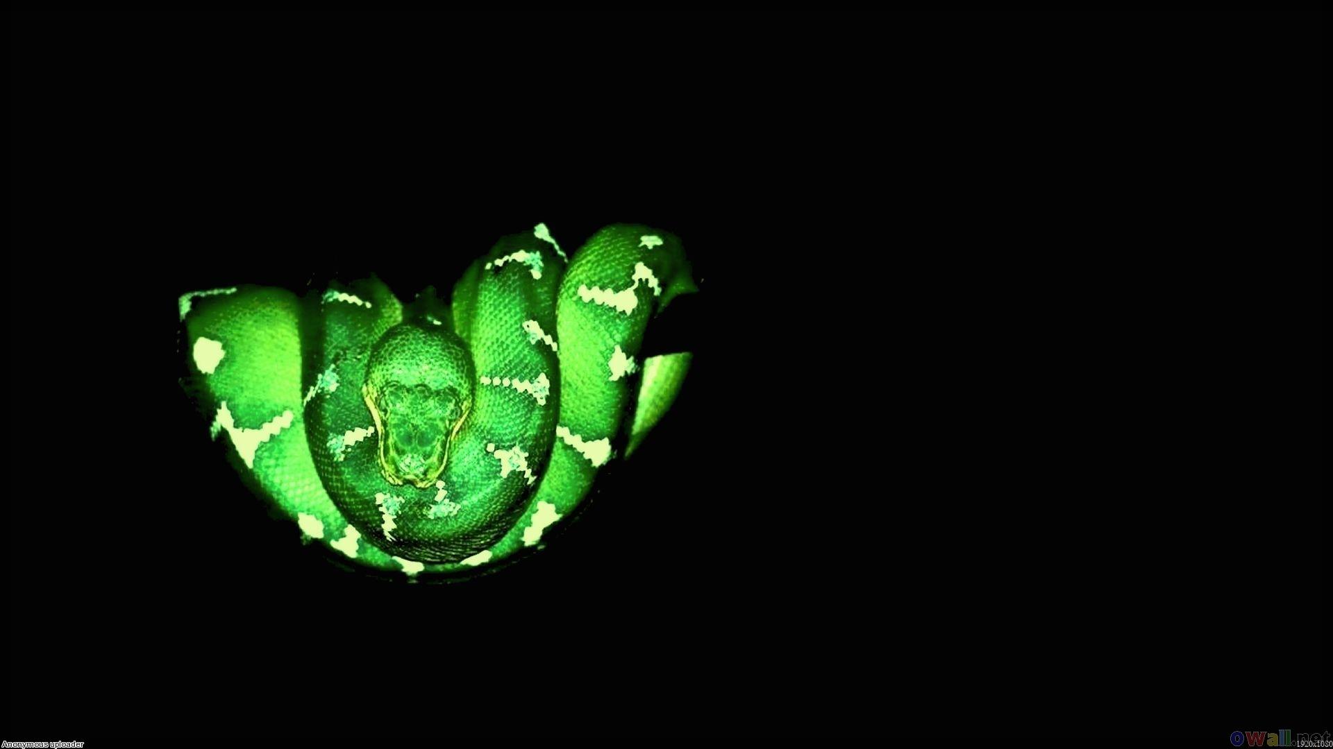 Зеленая змея, фото, обои для рабочего стола