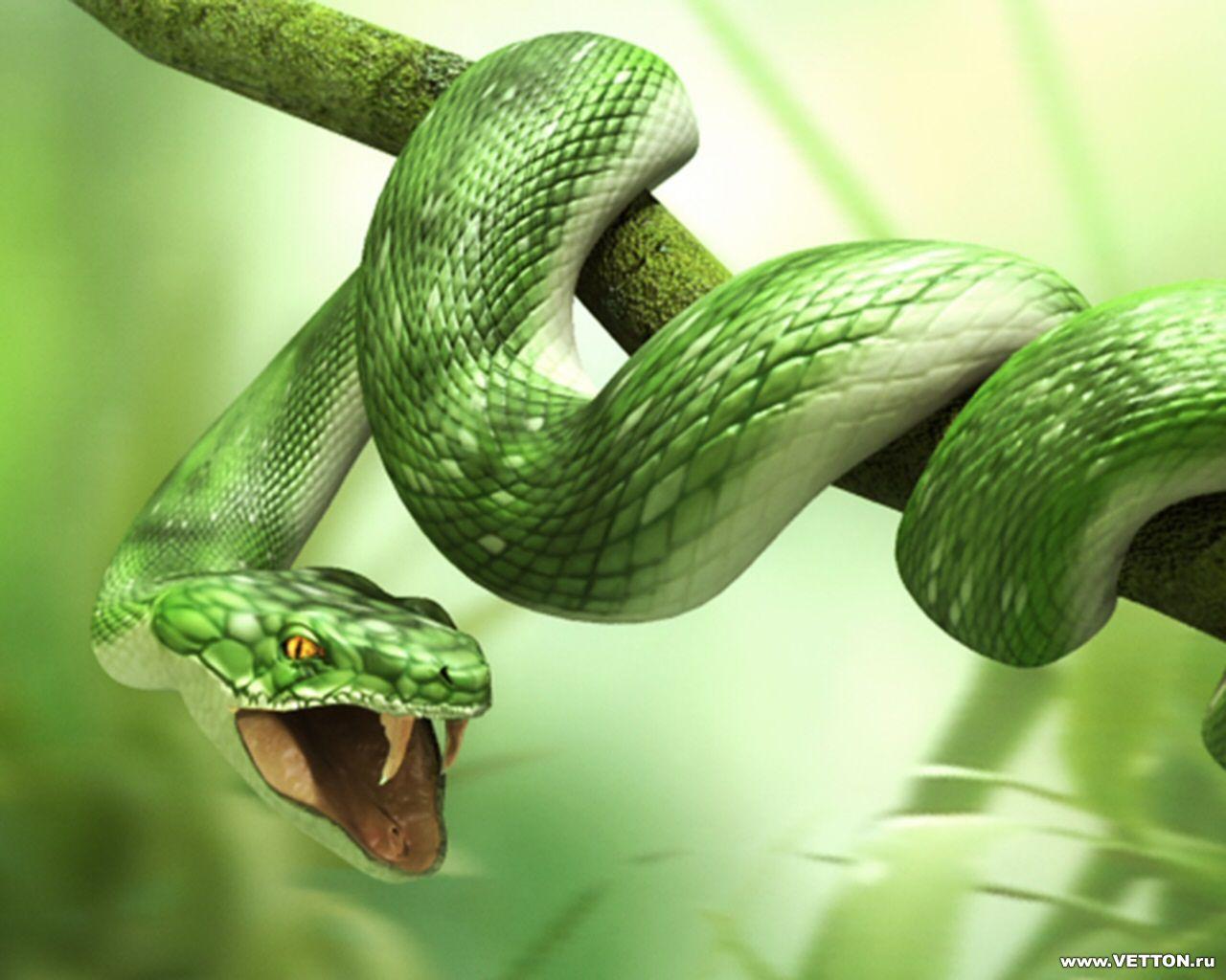 Змея, на дереве, фото, обои для рабочего стола, скачать бесплатно