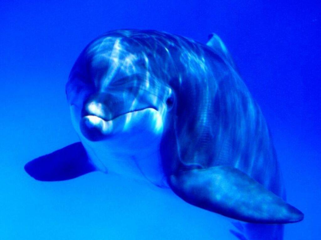 Дельфин в воде, морад дельфина, фото, море, обои для рабочего стола