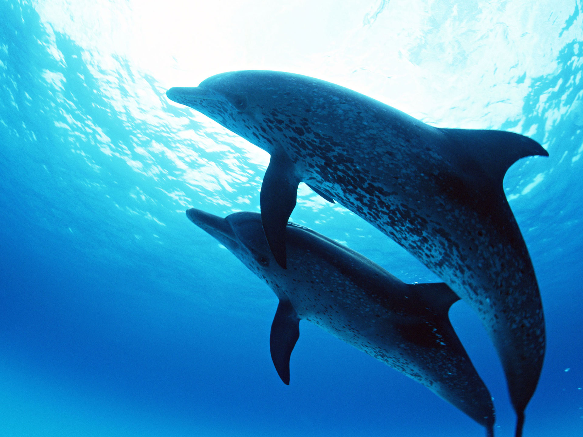 дельфины, свет, море, вода, скачать фото