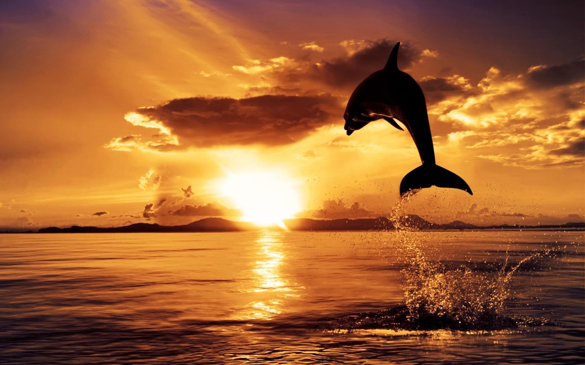 Обои для рабочего стола, скачать, море, дельфин выпрыгнул из воды