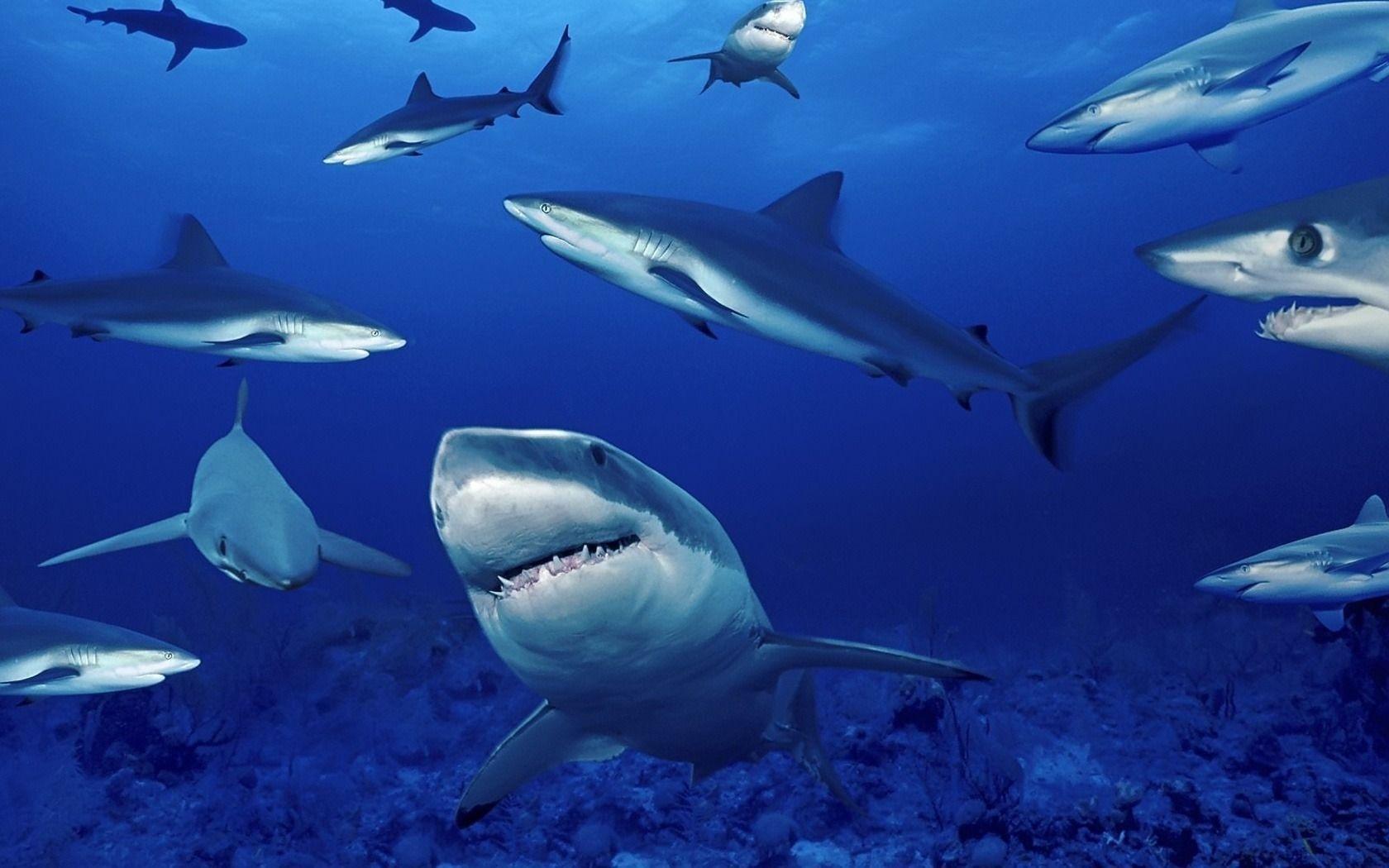 акулы, много акул, скачать, обои для рабочего стола