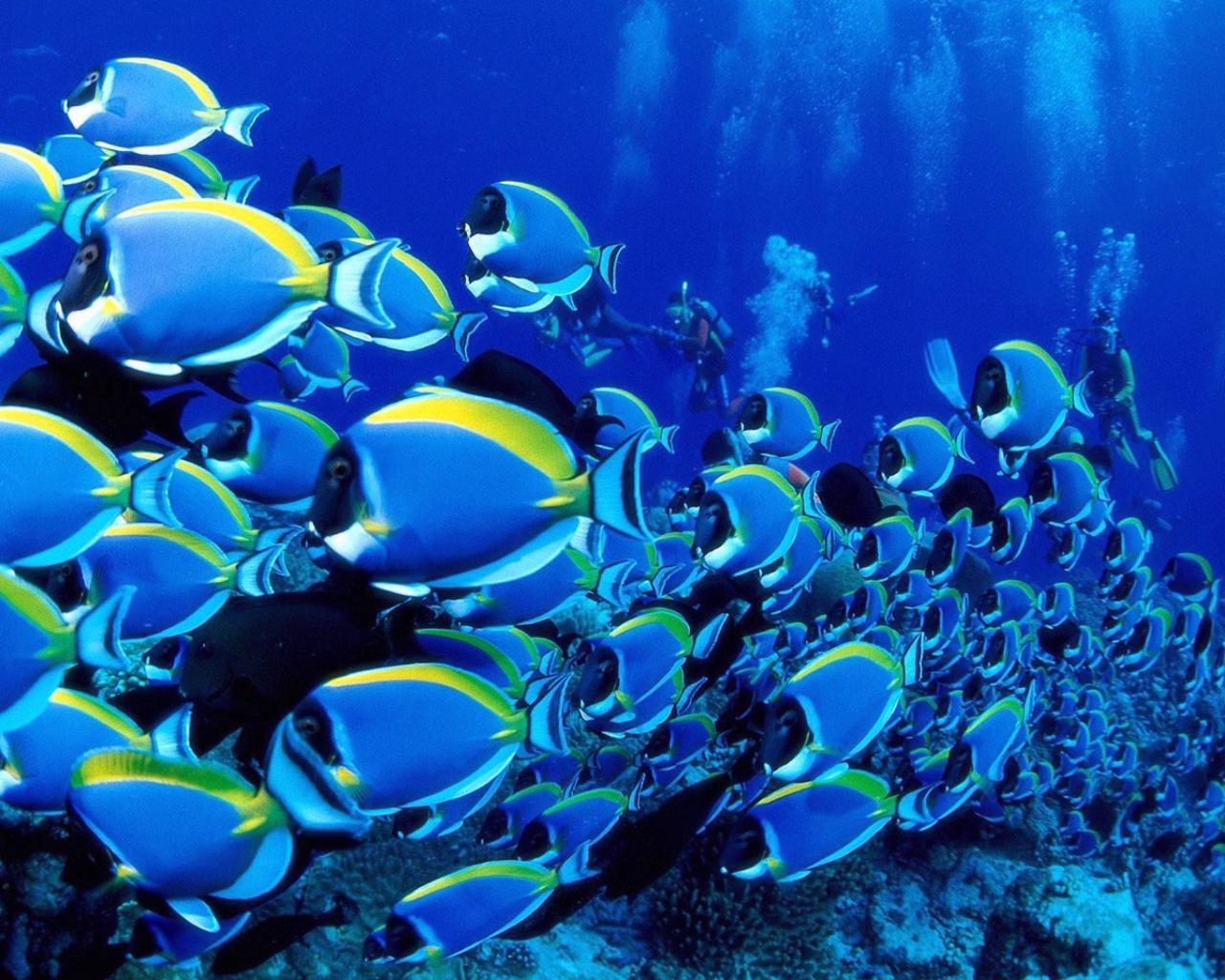 коралловые рыбки фото, обои, стая рыб, обои на рабочий стол