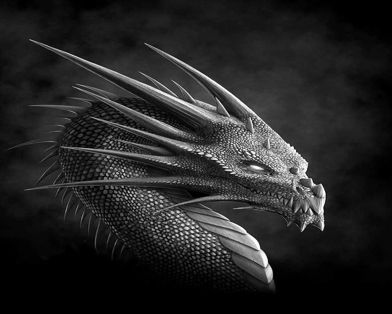 серый дракон, фото, скачать обои для рабочего стола