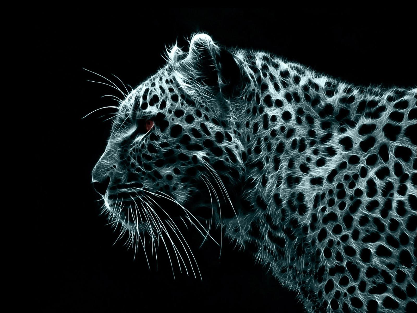 белый тигр, леопард, фото, обои для рабочего стола