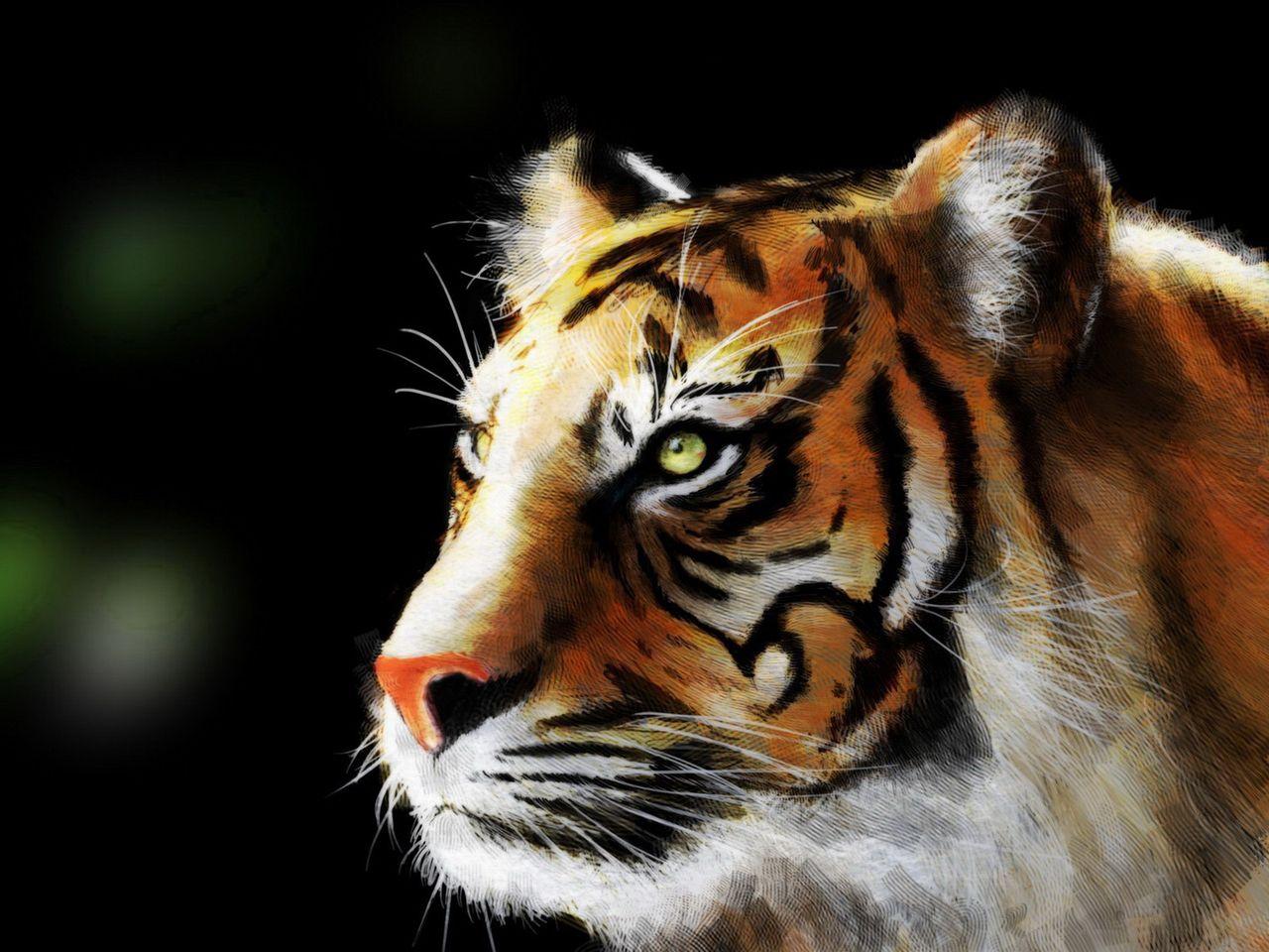 тигр, красивое фото, обои для рабочего стола, скачать