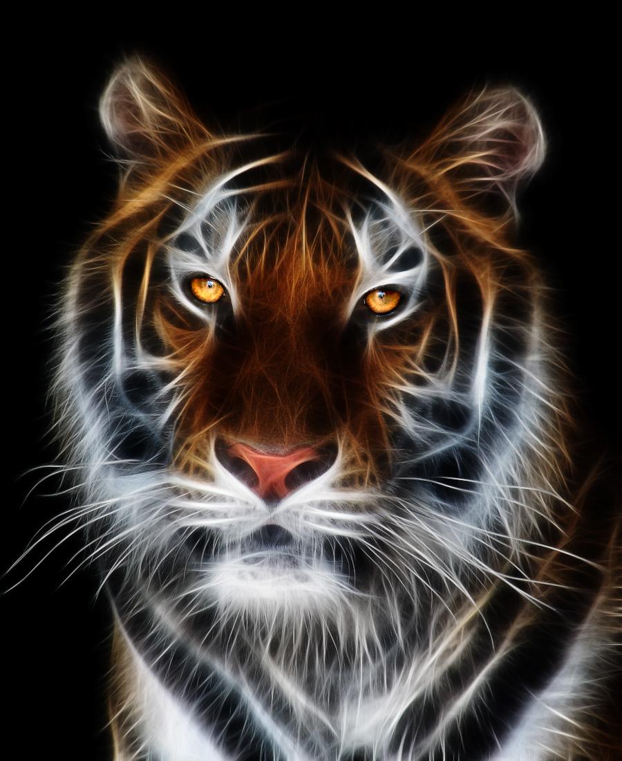 тигр, обои для рабочего стола, фото, скачать бесплатно, tiger