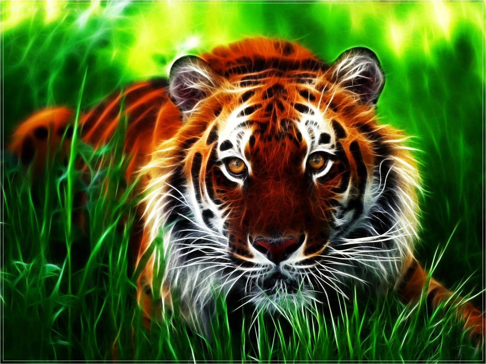 тигр в траве, фото, скачать, обои для рабочего стола