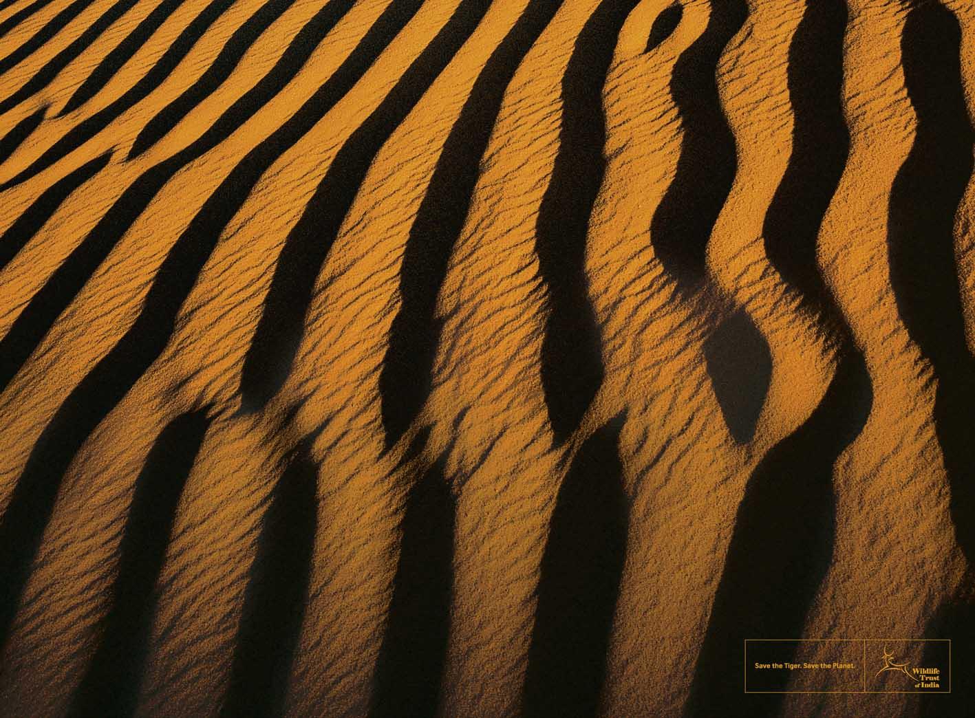 текстура, шкура тигра, полоски тигра, тигр, фото скачать обои