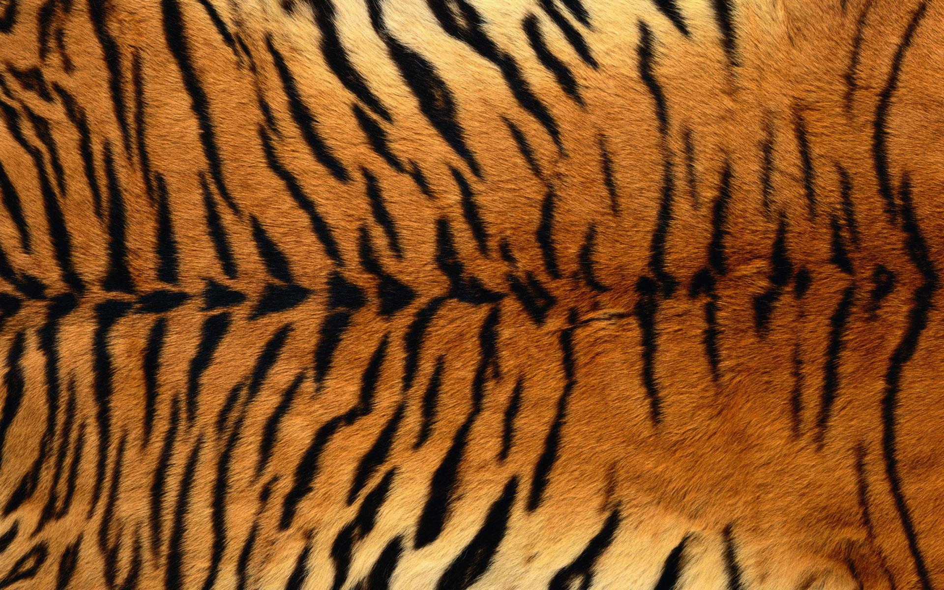 спина тигра, шкура тигра, фото, обои для рабочего стола, текстура