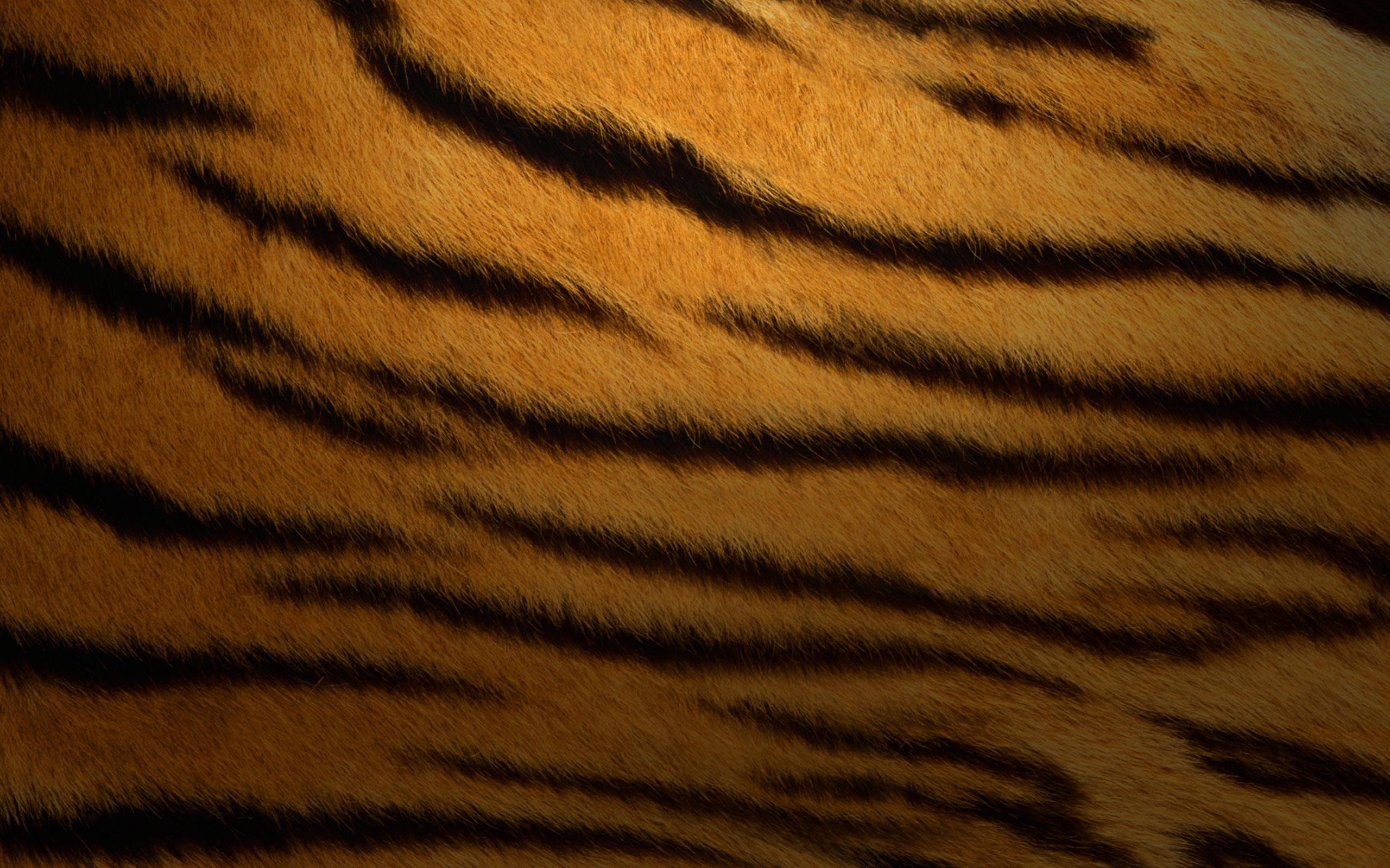 тигровая шкура, фото, скачать обои для рабочего стола