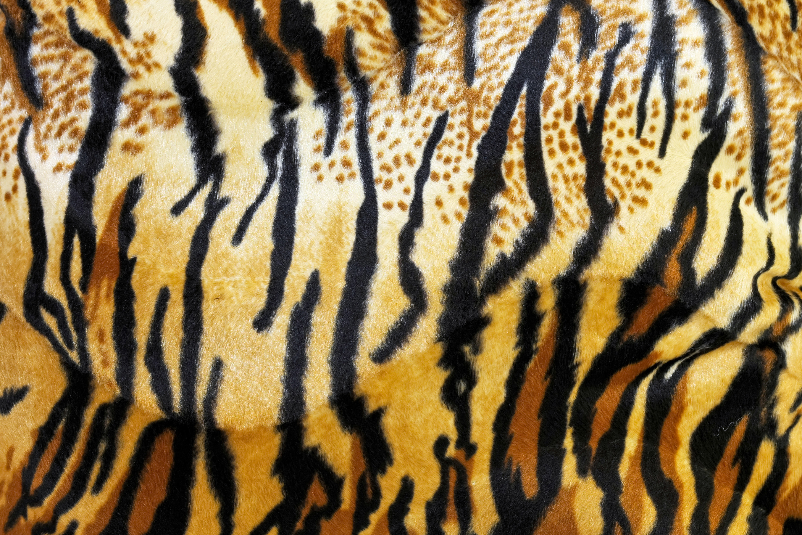 шкура тигра, фото, скачать