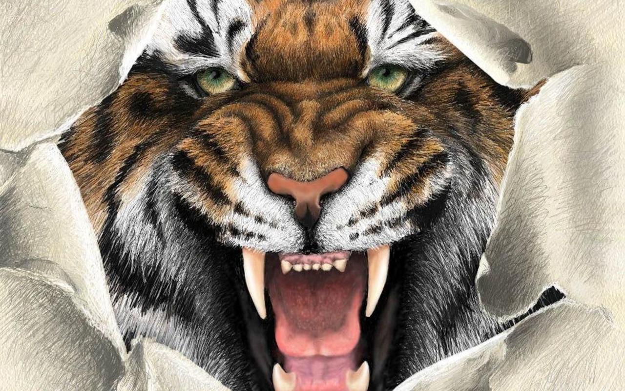 тигр рвет бумагу, фото, скачать обои для рабочего стола