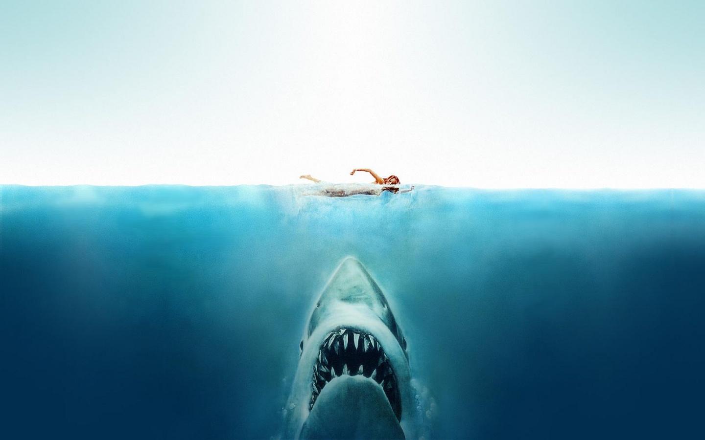 пловец, человек и акула, фото, рисунок, скачать обои для рабочего стола